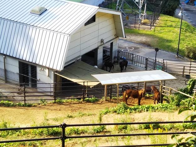 第3放牧場