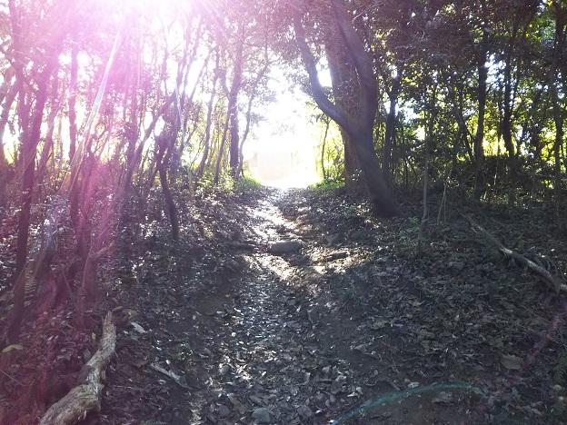 飯野山登山 ゴール