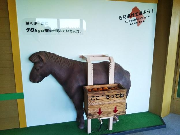 野間馬ものしり教室