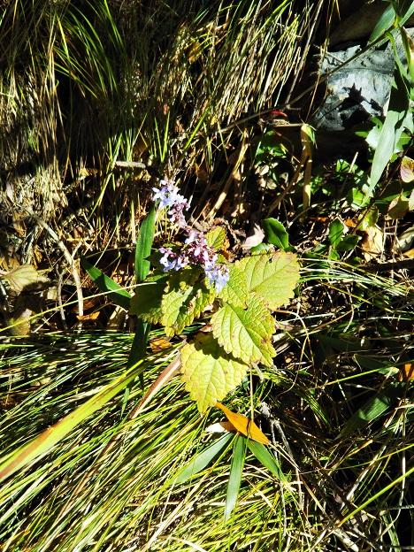 飯野山 お花