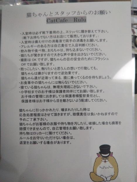 森の猫 Pato's Cafe(パトズカフェ)注意事項