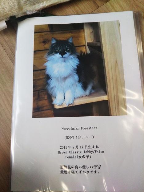 森の猫 Pato's Cafe(パトズカフェ)ネコ1