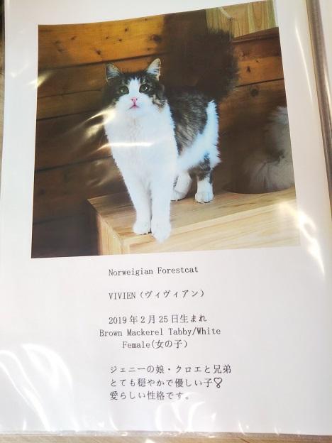 森の猫 Pato's Cafe(パトズカフェ)ネコ3