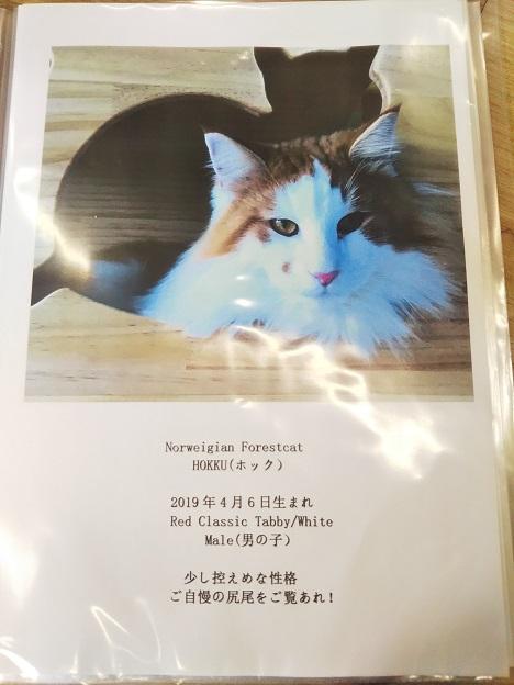 森の猫 Pato's Cafe(パトズカフェ)ネコ4