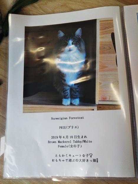 森の猫 Pato's Cafe(パトズカフェ)ネコ5