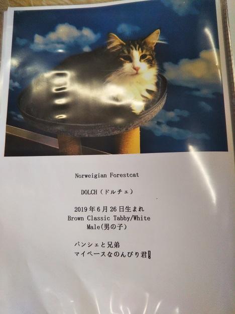 森の猫 Pato's Cafe(パトズカフェ)ネコ7