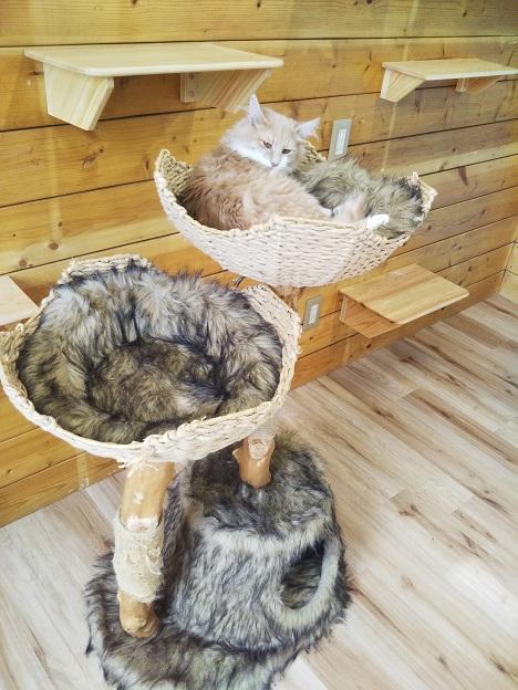 森の猫 Pato's Cafe(パトズカフェ)猫ちゃん3