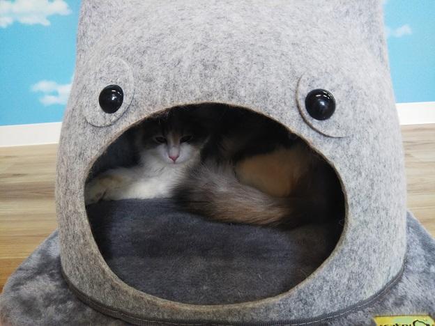 森の猫 Pato's Cafe(パトズカフェ)猫ちゃん4