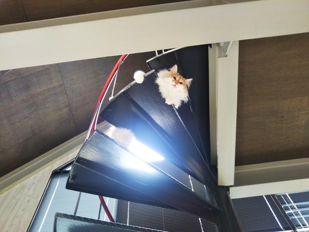 森の猫 Pato's Cafe(パトズカフェ)猫ちゃん6