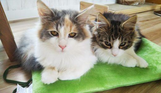 森の猫 Pato's Cafe(パトズカフェ)かわいい猫に癒されるネコカフェ 高松市