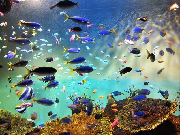 宮島水族館 青い魚