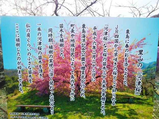 吉津の河津桜 看板2