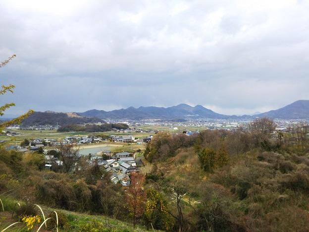 吉津の河津桜からの景色
