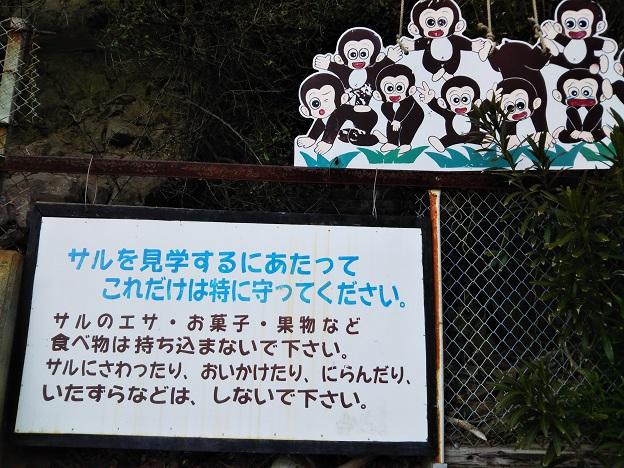 淡路島モンキーセンター サル山見学のルール