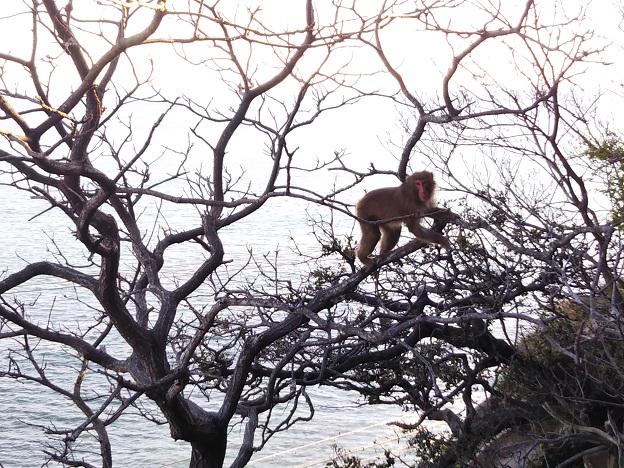 淡路島モンキーセンター 木の上のサル