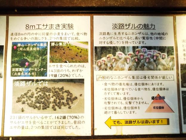 淡路島モンキーセンター サルの魅力