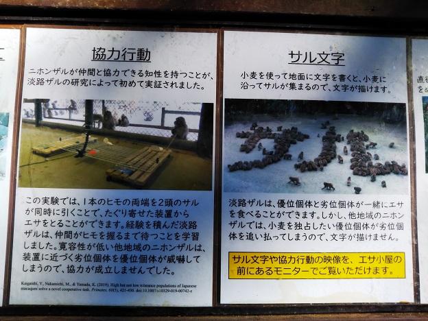 淡路島モンキーセンター 協力行動