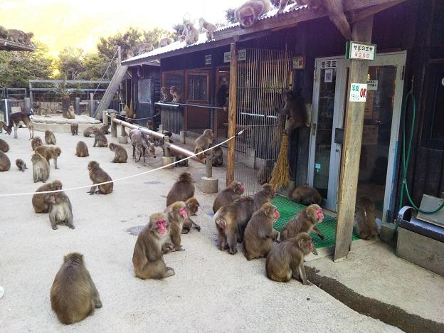 淡路島モンキーセンター サル