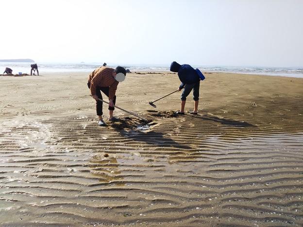 有明ふれあい海岸 マテ貝とり2