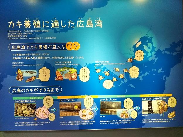 宮島水族館 カキ養殖