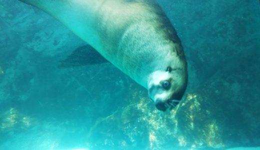 宮島水族館みやじマリン 瀬戸内海中心の展示350種13,000点