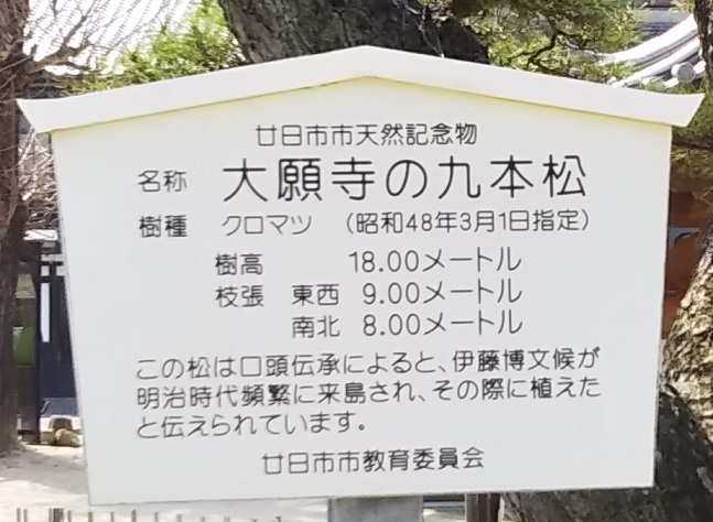 大願寺の九本松説明