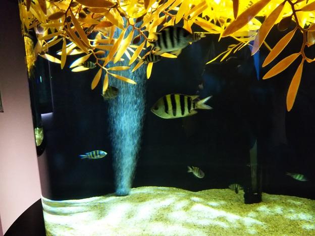 四国水族館 流れ藻の景 オヤビッチャ