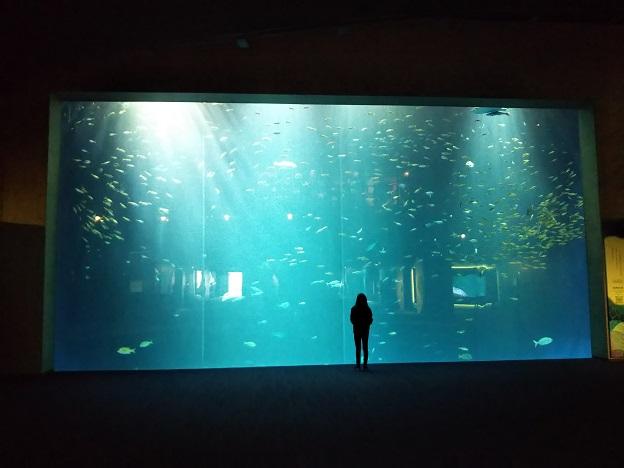 四国水族館 綿津見の景