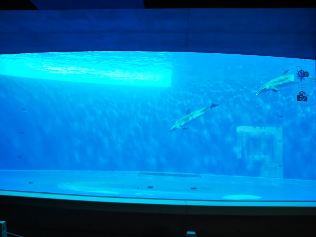 四国水族館 イルカ水槽