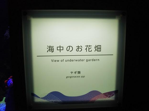 四国水族館 ○○景