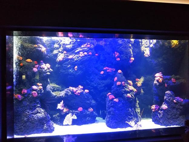 四国水族館 海中のお花畑