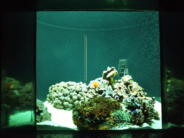 四国水族館 ミクロの景 イバラカンザシ