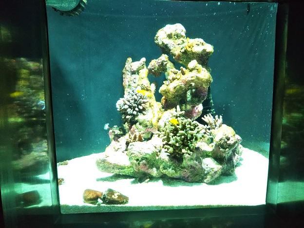 四国水族館 ミクロの景 キイロサンゴハゼ