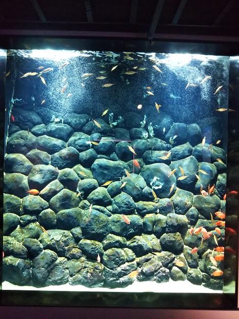 四国水族館 陸棚縁辺部の景 サギフエ