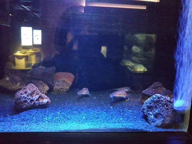 四国水族館 深海底の景 キホウボウ