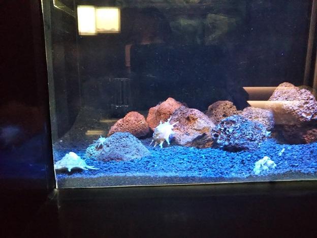 四国水族館 深海底の景 マツカワガイ