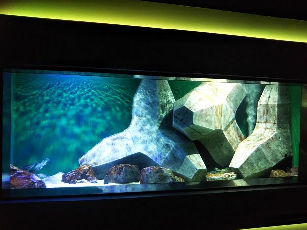 四国水族館 瀬戸内のヌシの景 コブダイ