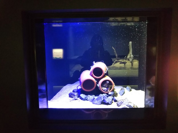 四国水族館 蛸壺の景 マダコ1
