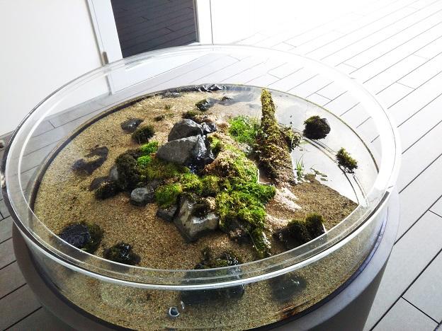 四国水族館 石清水の景 サワガニ1