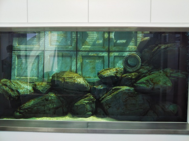 四国水族館 巨大魚の景 アカメ1