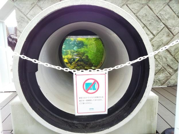 四国水族館 石倉の景 二ホンウナギ土管