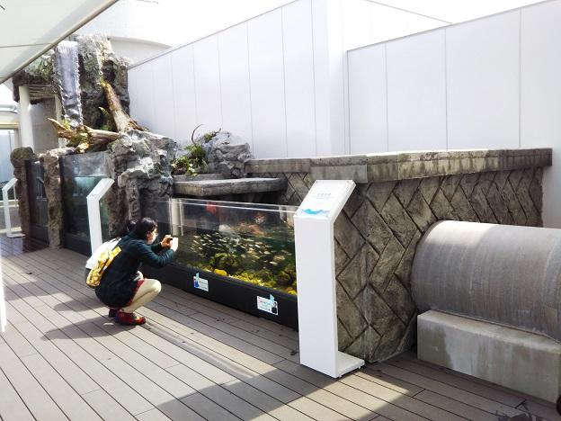 四国水族館 石倉の景 二ホンウナギ