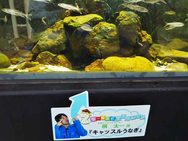 四国水族館 石倉の景 二ホンウナギキャッスルウナギ