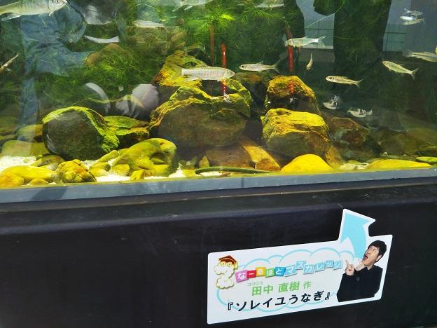 四国水族館 石倉の景 二ホンウナギソレイユウナギ