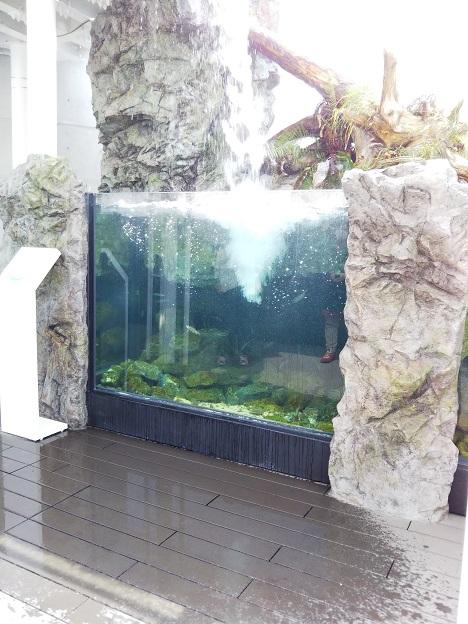 四国水族館 魚止めの景 アマゴ