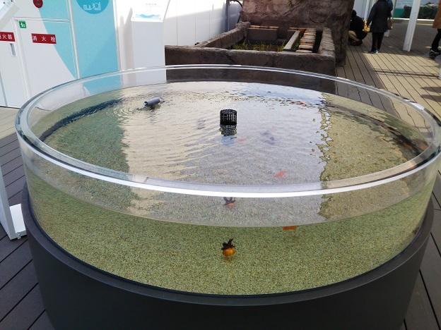 四国水族館 四国金魚の景 トサキン1