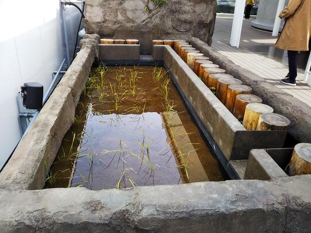 四国水族館 瑞穂の景 ミナミメダカ