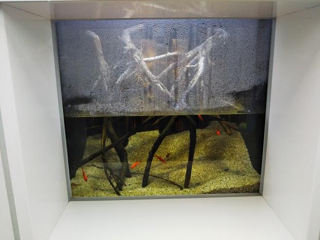 四国水族館 湿地の景 タガメ