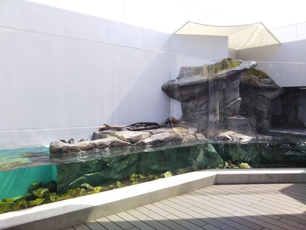 四国水族館 川獺がいた景 コツメカワウソ