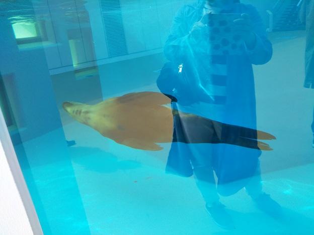 四国水族館 海驢の景 カリフォルニアアシカ